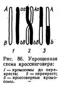 169.jpg